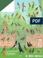 Le poster de la ligue de protection des oiseaux pour bien reconnaître les espèces.