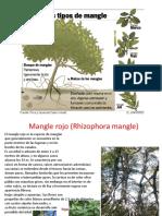 eco manglar.pptx