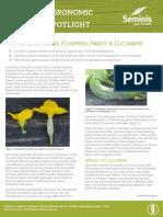 Understanding-Flowering-Habits-in-Cucumbers-Seminis