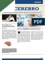 EL CEREBRO Y SU FUNCIONAMIENTO