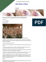 Instalaciones y Equipos Para Pollos