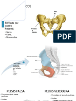 anatomia musculoesqueleticca