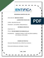 1.INFORME BIOMOLECULAS (1)