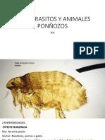 ECTOPARASITOS Y ANIMALES PONÑOZOS 3.0