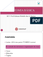 06.ANATOMIA BÁSICA