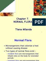 7.Flora Normal
