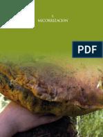 Micorrizacion.pdf