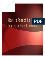 parts-of-the-brain-and-brain-function