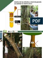 15 Part 2-Medicion del Carbono - G.Kapp et al.pdf