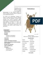 Melolonthinae