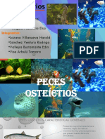 PECES EXPO.pptx