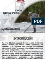Usos Alternativos de la Yuca.ppt