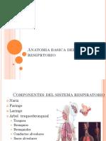 Anatomia basica del sistema resiprtorio