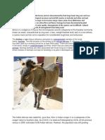Equus asinus and wild ass