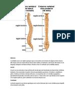 Columna Vertebral, Medula,Fusionar