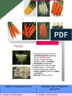 carrot and radish