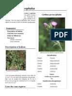 Carduus_pycnocephalus
