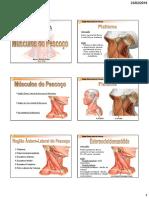 Músculos-do-Pescoço1