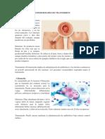 ENFERMEDADES DE TRANSMISION.docx