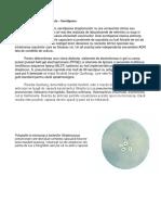 Strepto - Diagnostic de referinta - serotipare - secventiere gena EMM.docx