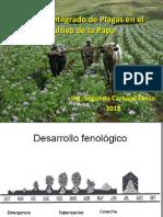 PLAGAS DE LA PAPA (1)