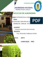 PRIMER-INFORME-DE-ENTO-AGRICOLA