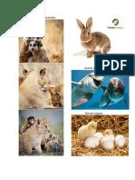 4 imágenes de animales.docx