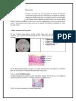 citologia norma