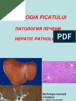 23. Patologia ficatului