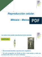 Clase Mitosis Meiosis