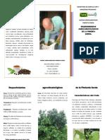 trifolio-Requerimientos-Agroclimatologicos-de-la-Pimienta-Gorda