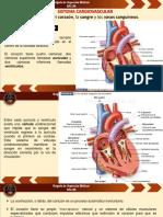 Anatomía y Fisiología 2.pdf