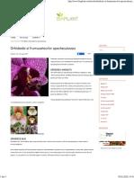 Orhideele si frumusetea lor spectaculoasa - Biaplant