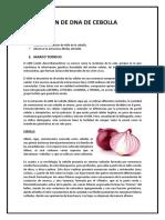 EXTRACCIÓN DE DNA DE CEBOLLA.docx