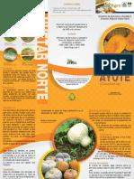 cultivo_ayote.pdf