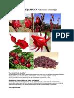 MARGARITA DE FLORES DE JAMAICA.pdf