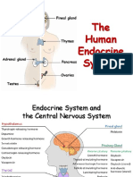 18-EndocrineSystem.ppsx