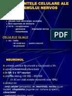 4. Fiziologia neuronului