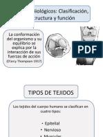 Tejidos-Biológicos-estructura-y-función (1)
