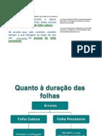 trab diogo.docx