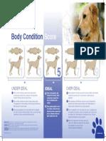 Body-Condition-Score-Dog.pdf