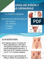 T13 Histología del Riñón.ppt