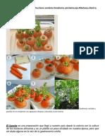 Como sembrar zanhoria,Pimientos,Ajos,Albahaca, Cilantro,La Enfermera.docx