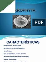 PYRROPHYTA