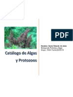catalogo de  algas