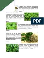 Plantas Arbustos y Otras Plantas