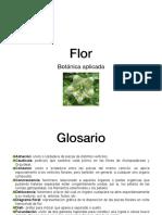 Flor IAC