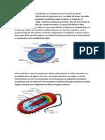 INTRDUCCION DE LA CELULA En biología.docx