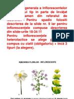 bio.inflor.pdf