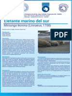 elefante_marino_del_sur